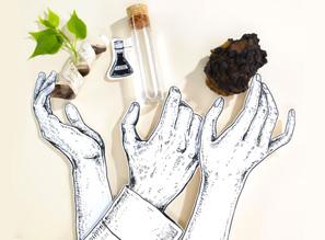 description du brevet immunox (complexe Sève fraîche de bouleau bio et Chaga bio) présents dans les soins cosmétiques visage Saeve Paris